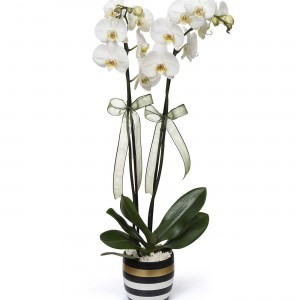 2 Branch Orchid Flower in Gold Striped Vase-1