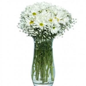 Daisy Garden in Vase-1
